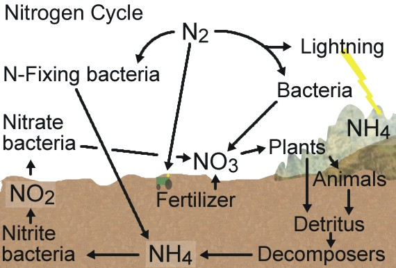 essays on the nitrogen cycle